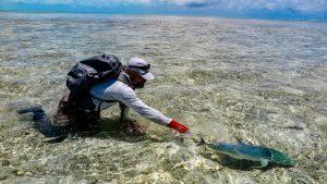 St-Brandons-Atoll-Bluefin-Trevally-Release-Derek-Hutton