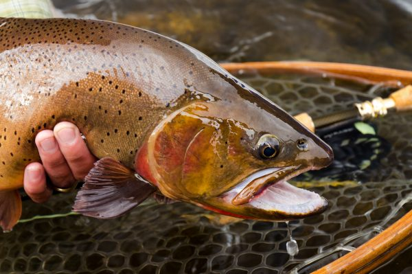 South Fork of the Snake Fly Fishing